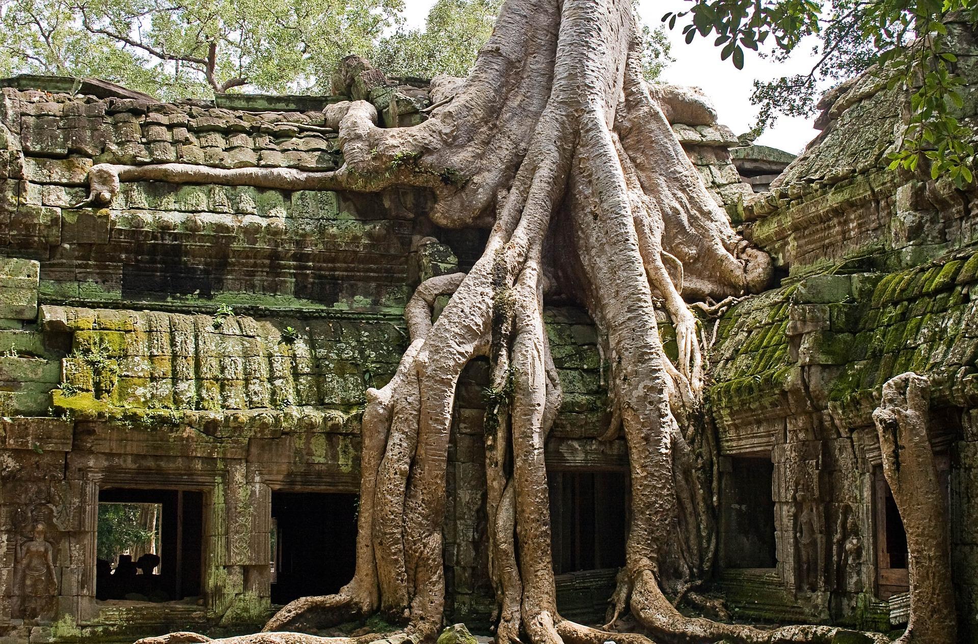 Siem Reap temple nature arbre