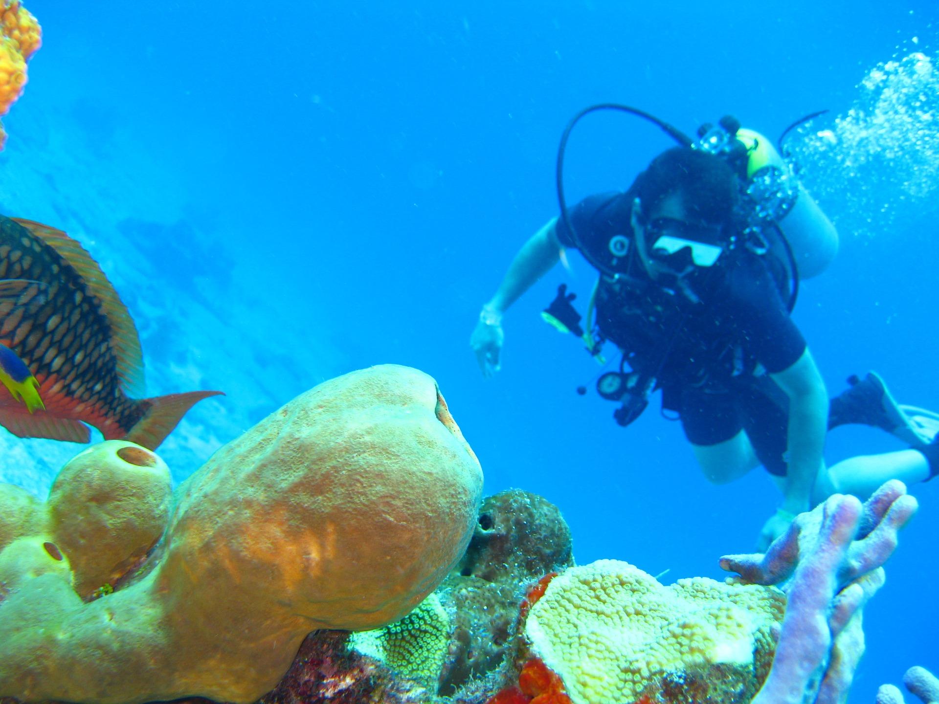 plongée poissons partir en Thaïlande